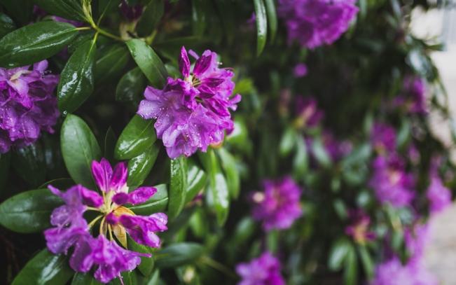 Fleur-Mariage